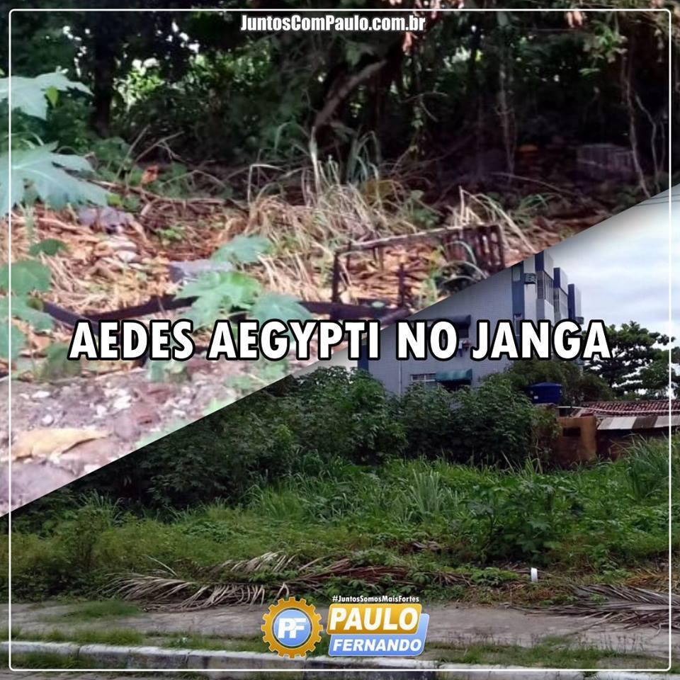 Aedes Aegypti no Janga